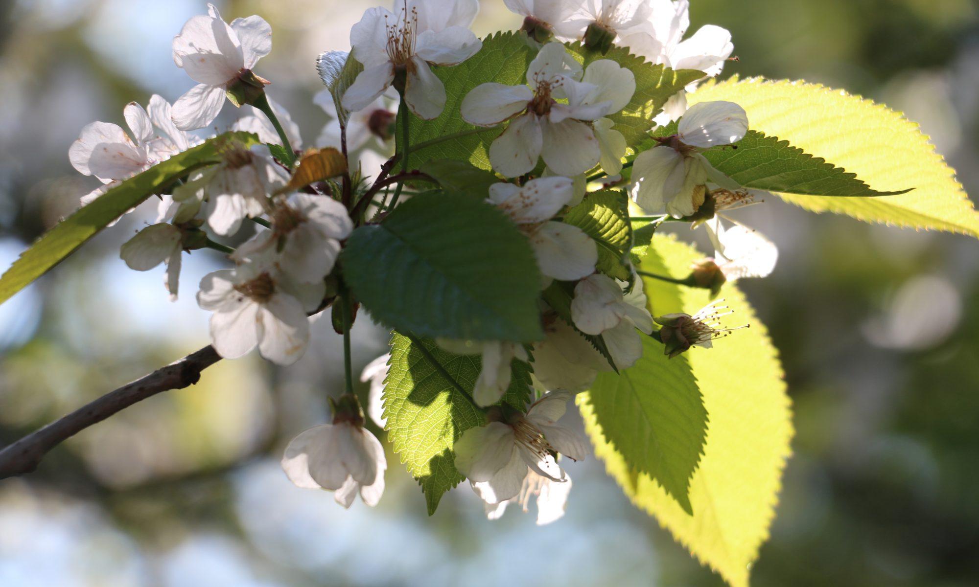 Flower blossom on a tree